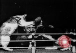 Image of Boxing cats West Orange New Jersey USA, 1894, second 11 stock footage video 65675071490