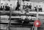Image of Bucking Bronco West Orange New Jersey USA, 1894, second 8 stock footage video 65675071499
