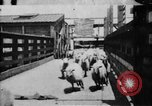 Image of Chicago stockyards Chicago Illinois USA, 1897, second 2 stock footage video 65675071534