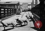 Image of Chicago stockyards Chicago Illinois USA, 1897, second 3 stock footage video 65675071534
