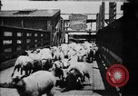 Image of Chicago stockyards Chicago Illinois USA, 1897, second 7 stock footage video 65675071534