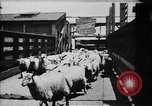 Image of Chicago stockyards Chicago Illinois USA, 1897, second 9 stock footage video 65675071534