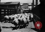 Image of Chicago stockyards Chicago Illinois USA, 1897, second 10 stock footage video 65675071534