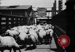 Image of Chicago stockyards Chicago Illinois USA, 1897, second 12 stock footage video 65675071534