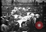 Image of Cattle to slaughter Chicago Illinois USA, 1897, second 11 stock footage video 65675071535