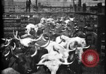 Image of Cattle to slaughter Chicago Illinois USA, 1897, second 12 stock footage video 65675071535
