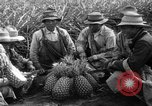Image of pineapples Hawaii USA, 1916, second 3 stock footage video 65675071573