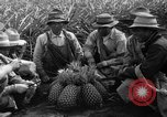 Image of pineapples Hawaii USA, 1916, second 5 stock footage video 65675071573