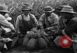 Image of pineapples Hawaii USA, 1916, second 6 stock footage video 65675071573