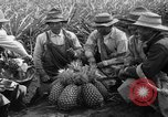 Image of pineapples Hawaii USA, 1916, second 9 stock footage video 65675071573