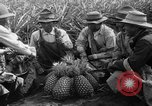 Image of pineapples Hawaii USA, 1916, second 10 stock footage video 65675071573