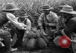 Image of pineapples Hawaii USA, 1916, second 11 stock footage video 65675071573