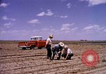 Image of agriculture United States USA, 1956, second 8 stock footage video 65675071651