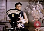 Image of harvesting chickens fruits and vegatables United States USA, 1956, second 10 stock footage video 65675071652