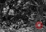 Image of communication activities Peleliu Palau Islands, 1945, second 5 stock footage video 65675071792