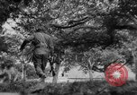 Image of Allied troops France, 1944, second 12 stock footage video 65675072017