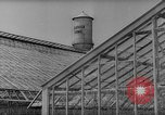 Image of pea crop New Jersey United States USA, 1946, second 5 stock footage video 65675072231