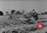 Image of pea crop New Jersey United States USA, 1946, second 9 stock footage video 65675072231