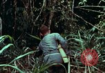 Image of survival techniques Philippines, 1968, second 8 stock footage video 65675072400