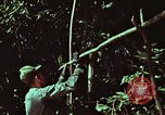 Image of survival techniques Philippines, 1968, second 7 stock footage video 65675072403