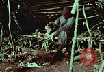 Image of survival techniques Philippines, 1968, second 10 stock footage video 65675072404