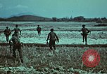 Image of survival techniques Philippines, 1968, second 12 stock footage video 65675072407