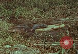 Image of jungle animals and fish Philippines, 1968, second 1 stock footage video 65675072410