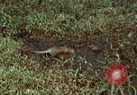 Image of jungle animals and fish Philippines, 1968, second 4 stock footage video 65675072410