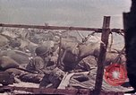 Image of Battle of Tarawa Tarawa Gilbert Islands, 1943, second 3 stock footage video 65675072666