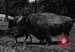 Image of cattle ranch United States USA, 1922, second 10 stock footage video 65675072780