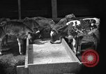 Image of cattle ranch United States USA, 1922, second 10 stock footage video 65675072781