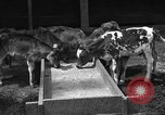 Image of cattle ranch United States USA, 1922, second 11 stock footage video 65675072781