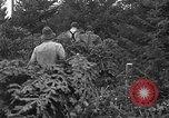 Image of Christmas tree harvest Shelton Washington USA, 1939, second 4 stock footage video 65675072846