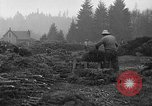 Image of Christmas tree harvest Shelton Washington USA, 1939, second 9 stock footage video 65675072846