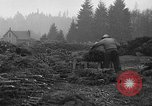 Image of Christmas tree harvest Shelton Washington USA, 1939, second 10 stock footage video 65675072846