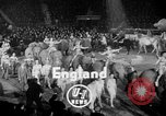 Image of Circus show in England United Kingdom, 1949, second 2 stock footage video 65675073139