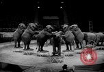 Image of Circus show in England United Kingdom, 1949, second 9 stock footage video 65675073139