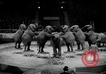 Image of Circus show in England United Kingdom, 1949, second 10 stock footage video 65675073139