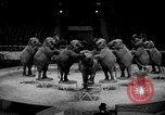 Image of Circus show in England United Kingdom, 1949, second 11 stock footage video 65675073139
