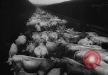 Image of shipment of livestock United States USA, 1945, second 9 stock footage video 65675073173