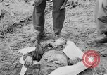 Image of mass burial Gardelegen Germany, 1945, second 4 stock footage video 65675073349