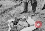 Image of mass burial Gardelegen Germany, 1945, second 6 stock footage video 65675073349