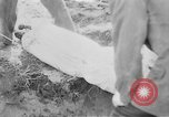 Image of mass burial Gardelegen Germany, 1945, second 12 stock footage video 65675073349