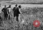 Image of Cocker Spaniels Verbank New York USA, 1935, second 10 stock footage video 65675073363