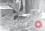 Image of puppies Paris France, 1945, second 1 stock footage video 65675074007