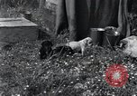 Image of puppies Paris France, 1945, second 2 stock footage video 65675074007