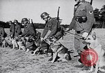 Image of Canines Germany, 1940, second 6 stock footage video 65675074056