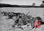 Image of Canines Germany, 1940, second 8 stock footage video 65675074056