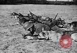 Image of Canines Germany, 1940, second 11 stock footage video 65675074056