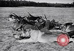 Image of Canines Germany, 1940, second 12 stock footage video 65675074056